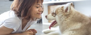 La phytothérapie, aussi pour les chiens vieillissants